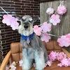 3月のスタジオロン と髭犬祭からのお知らせの画像