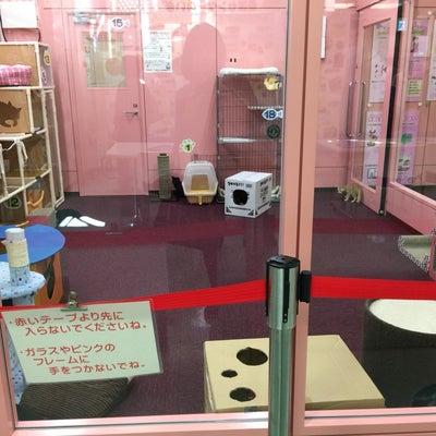 名古屋市動物愛護センターふるさと納税で殺処分ゼロの取り組みの記事に添付されている画像