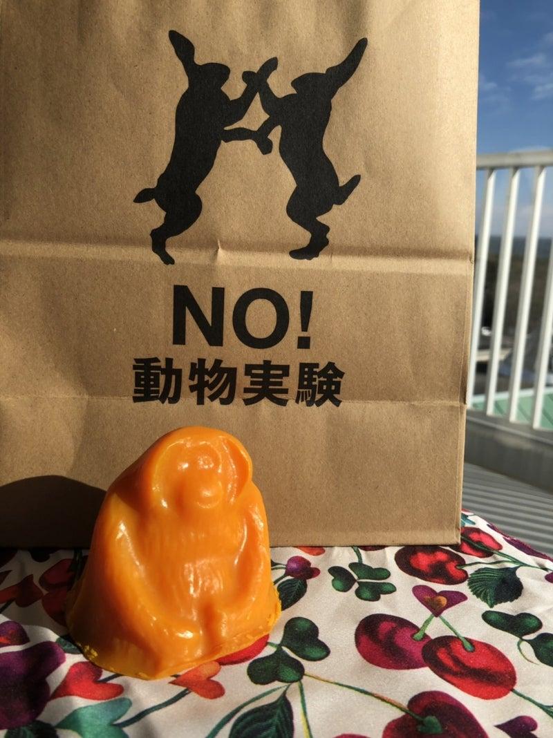 NO! 動物実験 (2019年2月28日付 アメブロを 再アップ)