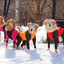 1月14日 マキノ高原DE雪遊びの記事に添付されている画像