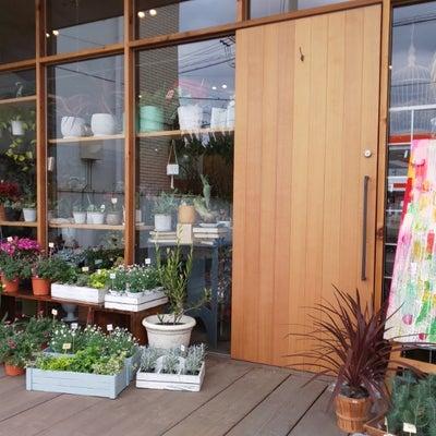 岐阜の素敵なお花屋さん。KUSAKANMURI(くさかんむり)の記事に添付されている画像