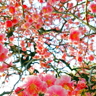 記憶の花びら♡光と影の記事に添付されている画像