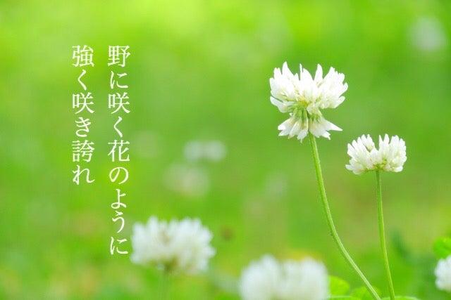 に 花 野 咲く に の よう