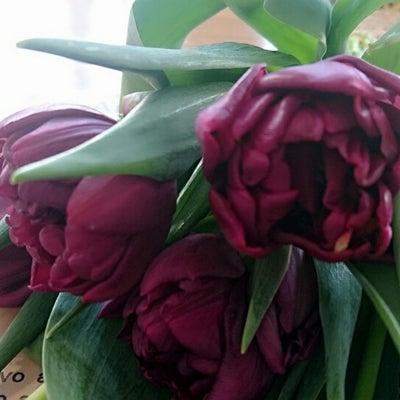 ♪春のお花♪の記事に添付されている画像