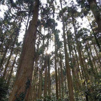 「龍神ツアーin奈良~生駒宝山寺後編~」の記事に添付されている画像