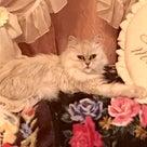 お誕生日会ステーキ専門店でお祝い卒業式春の旅行に温泉タオルン乳がん猫プリンセスのんのの記事より