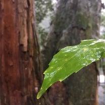 伊勢神宮⑦月讀宮にてイザナミからの教えの記事に添付されている画像