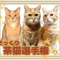 【確定】そっくり茶猫選手権 参加にゃんず一覧!!の記事に添付されている画像