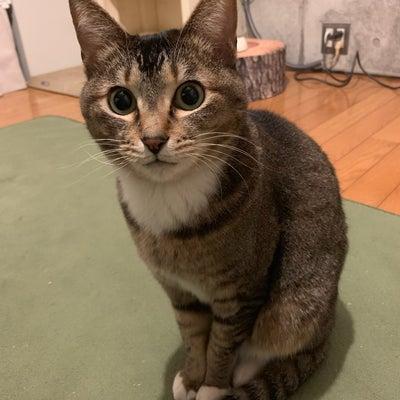 猫のいびきの記事に添付されている画像