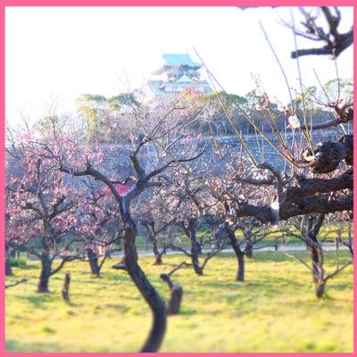 講座の後は梅を見に。の記事に添付されている画像