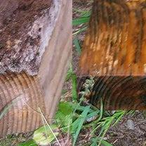 2019-331 木が・・すぐダメになるからさ~ 木がダメになるからさ~、木の防の記事に添付されている画像