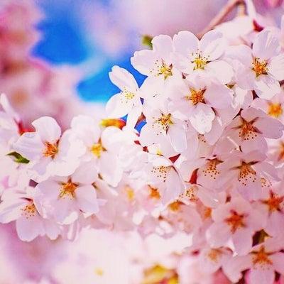 三益酒店【お花見日本酒ピクニック】開催しますの記事に添付されている画像