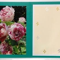 ハウステンボスのバラの写真でグリーティングカード手作りです!2019.3.4.の記事に添付されている画像