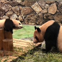 白浜のパンダの記事に添付されている画像