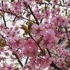 3月23日☆ビーマーライトペン「セルフ Love ケア」講座の画像