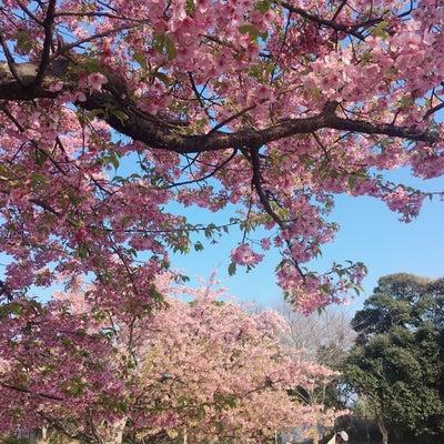 江ノ島へお花見への記事に添付されている画像