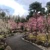 城南宮さんの「枝垂れ梅と椿まつり」の画像