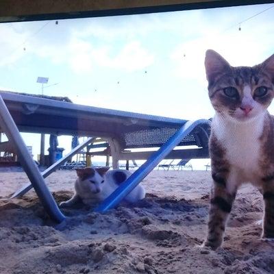 世界ネコ歩き。の記事に添付されている画像