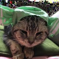 ガチャガチャ猫グッズ(その4)の記事に添付されている画像