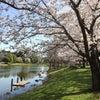 花ひらく☆ロシニヨーガ 春のヨガイベント 2019の画像