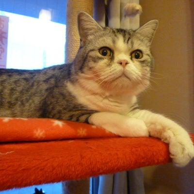 3月の猫カフェ営業日の記事に添付されている画像