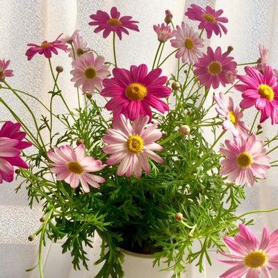 潜在意識とお花と藤城清治さんの記事に添付されている画像