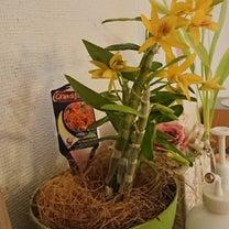 失敗したようで成功した花とその逆の花の記事に添付されている画像