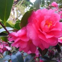 12月と1月に逢った花の記事に添付されている画像