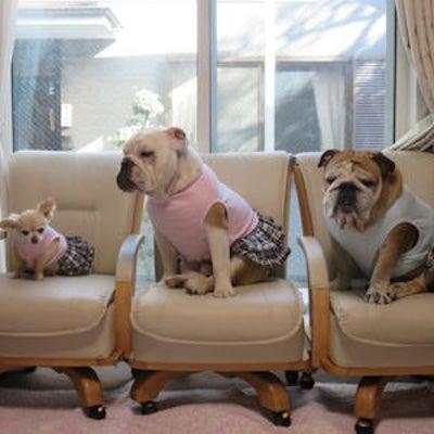お客様からの可愛いお写真。ウナちゃん、ナマ君、ヒーちゃん(ブルドッグ )・レン7の記事に添付されている画像