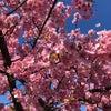 春の足音の画像