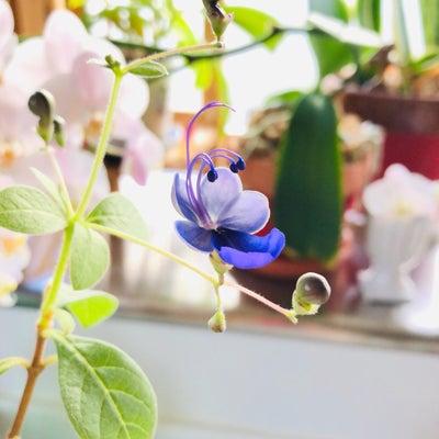 ブルーエルフィンが咲いたんです。そして鯉のぼり作品追加情報。の記事に添付されている画像