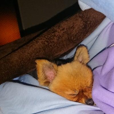 布団で眠れる幸せの記事に添付されている画像