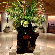 旅友とフラダンスを見ながらディナー@ハレクラニホテルの記事に添付されている画像