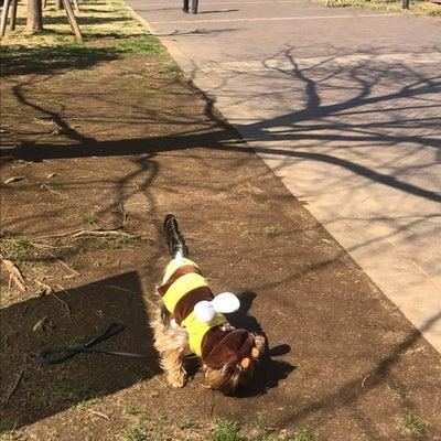 ㊗️  桜  開花宣言…コスパ高いイタリアンを愛犬琥珀と一緒にの記事に添付されている画像