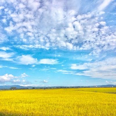 津軽弁、田園風景…大好きが止まらない〜〜♪の記事に添付されている画像
