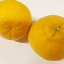 美味しすぎるデコポンの効能の記事に添付されている画像