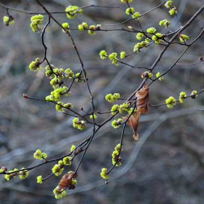 ** 野にも山にも花は咲く **の記事に添付されている画像