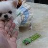特選犬 超スーパー極小サイズのチワワ王子登場の画像