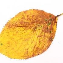 【一葉落ちて天下の秋を知る】の記事に添付されている画像