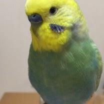 もし【外で鳥さんに出逢ったら】お願いしたい事の記事に添付されている画像