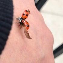 てんとう虫の記事に添付されている画像