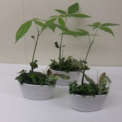 可愛らしいミニ観葉寄せ植え入荷致しました!の記事に添付されている画像