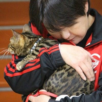 リアル猫活動「追記❗❗ねこけんM代表と事実を見て来ました❗❗」の記事に添付されている画像