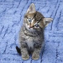今日は猫の日・好きな猫種は?の記事に添付されている画像