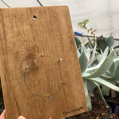 【着生植物】面白い!!シダもありますよんꉂ(σ▰˃̶̀ꇴ˂̶́)σ✧の記事に添付されている画像