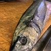 『魚春』の画像