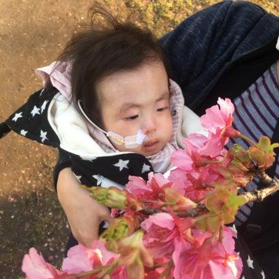 河津桜 お花見の記事に添付されている画像