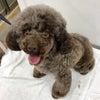 保護犬紹介の画像