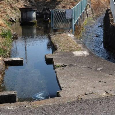 群馬県 宮田で偶然見つけた湧き水(^^♪の記事に添付されている画像