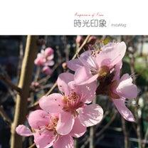 春の一声♬(結詞♪井上陽水)の記事に添付されている画像